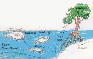 Penyambung dan penyeimbang ekosistem darat dan laut.