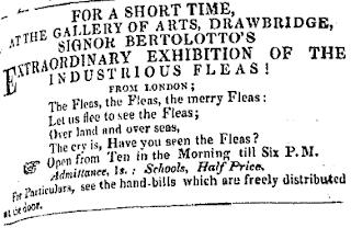 The Merry Fleas