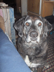 My geogypsy companion for amost 12 years. How I miss him.