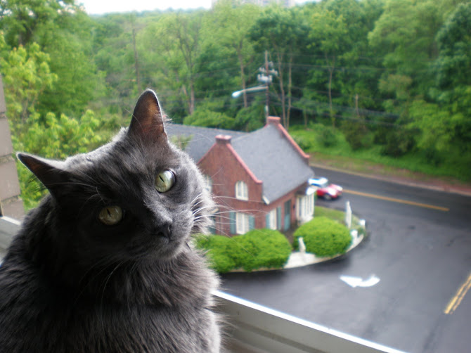 Abi enjoying the view from our apartment