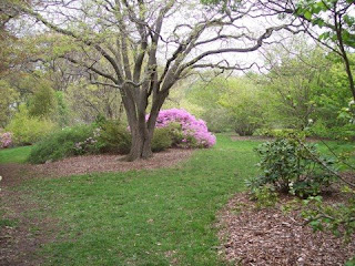 first photo of Arnold Arboretum, Jamaica Plain, MA