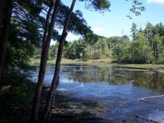 photo of Russell Mill Pond, Chelmsford, MA