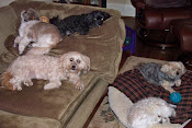 My five furry babies.
