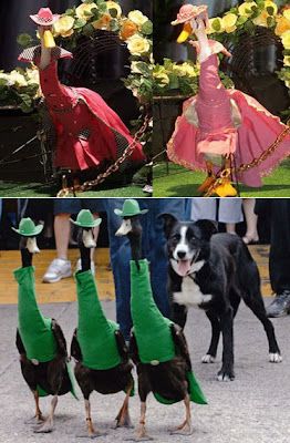 duck fashion parade model, duck fashion parade style, duck fashion parade show, duck fashion parade carnival, duck fashion parade competition