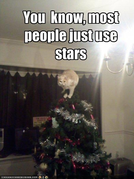 [funny-pictures-cat-climbs-the-christmas-tree.jpg]