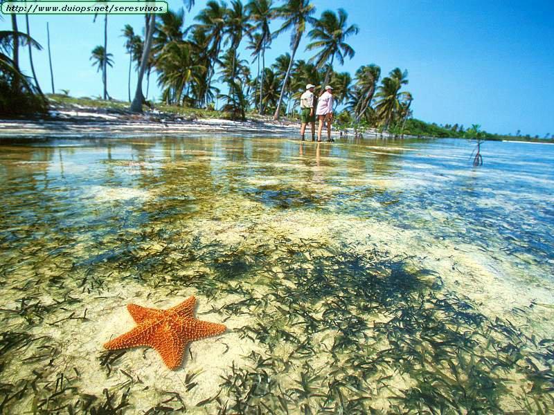 SEXTO CEIP LAS CANTERAS: Estrellas de mar (no le hagais caso, es una ...