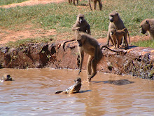 Fun at the waterhole