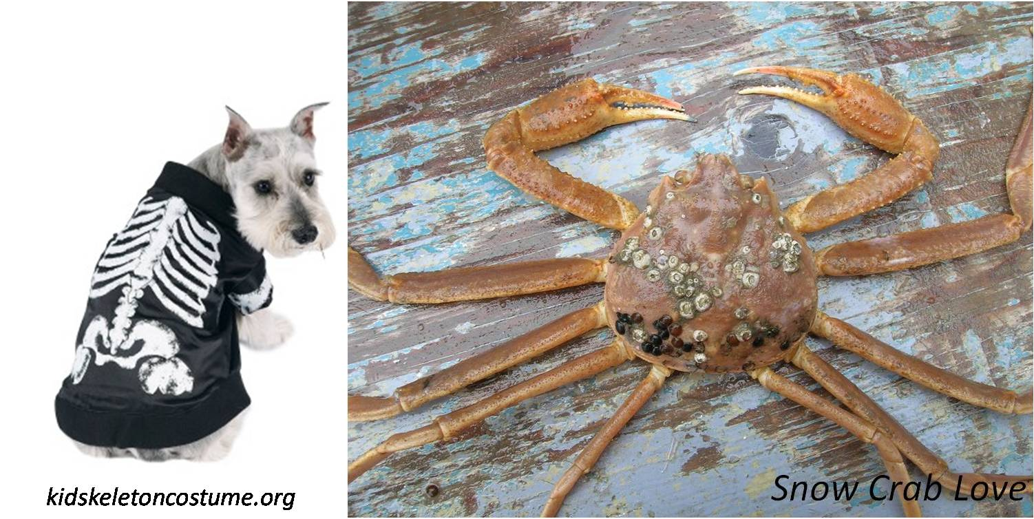 snow crab love: (exo)skeleton costumes