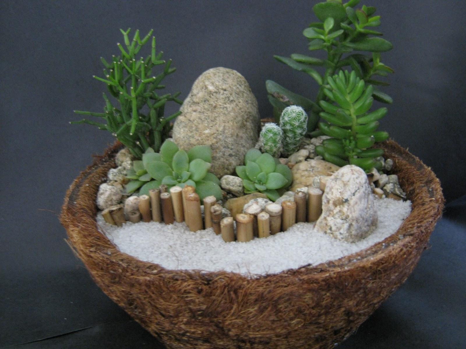 mini jardim suculentas:Claudio Lourenço Paisagismo: Mini-Jardins de Suculentas em Jarro de
