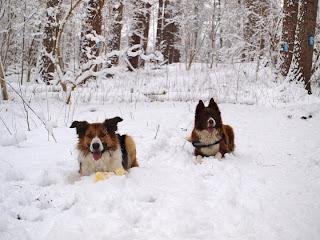 Welkom in ons Winter Wonderland