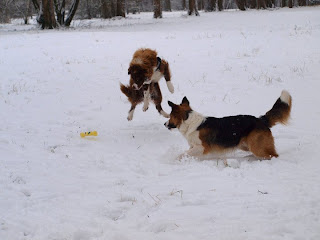 Landro is een KEI in het wegspringen van sneeuwvlokjes!