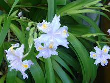Mis orquideas