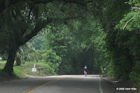 Old Magnolia Road photo