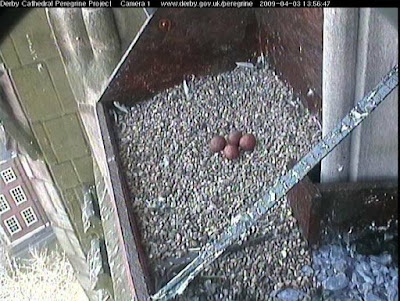 Webcam image captured Friday 3rd April