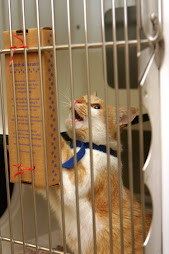 Donate cat scratchers to your favorite shelter!