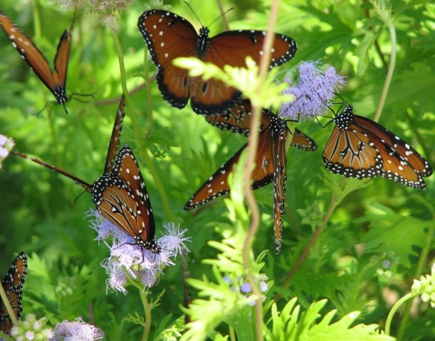 Watch How to Find and Catch Swallowtail Butterflies video