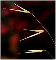 Bonhoeffer - Ritmos y Tiempos... 15-12-2010