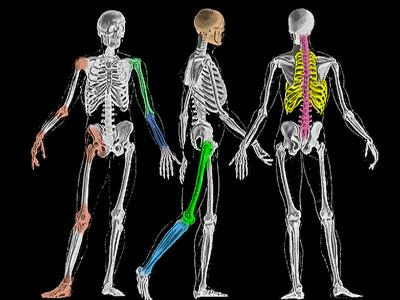 http://1.bp.blogspot.com/_5LovY5rVUPA/TNDY0f_tcbI/AAAAAAAAApE/A-0U4hDiZ4Y/s1600/tulang.jpg