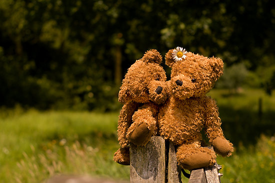 Teddy Bears Love Story game - didigames.com