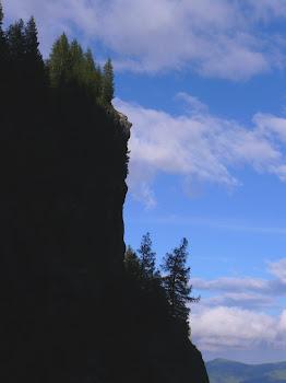 veghetor al muntilor