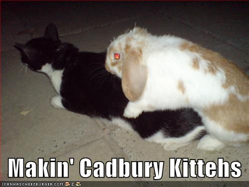 Makin Cadbury Kittehs