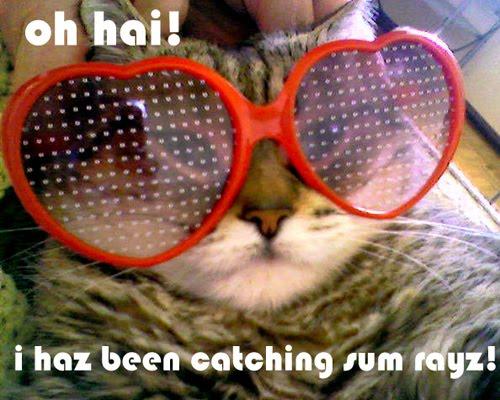 oh hai i haz been catching sum rayz