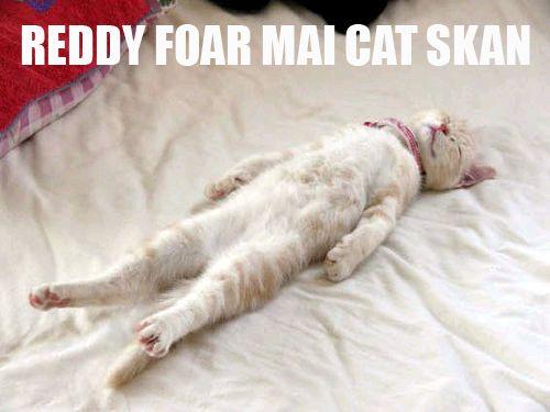REDDY FOAR MAI CAT SKAN
