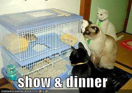 show dinner