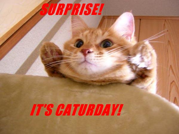 SURPRISE! IT'S CATURDAY