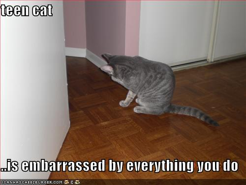 teen cat embarrassed everything