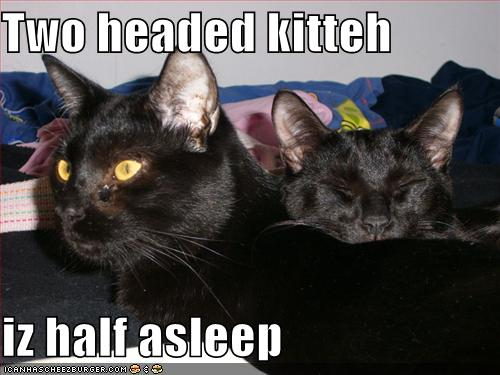 Two headed kitteh iz half asleep