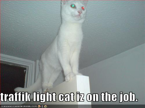 traffik light cat iz on the job