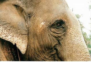 Centro de rehabilitación de elefantes, Chiang Rai. La mamá