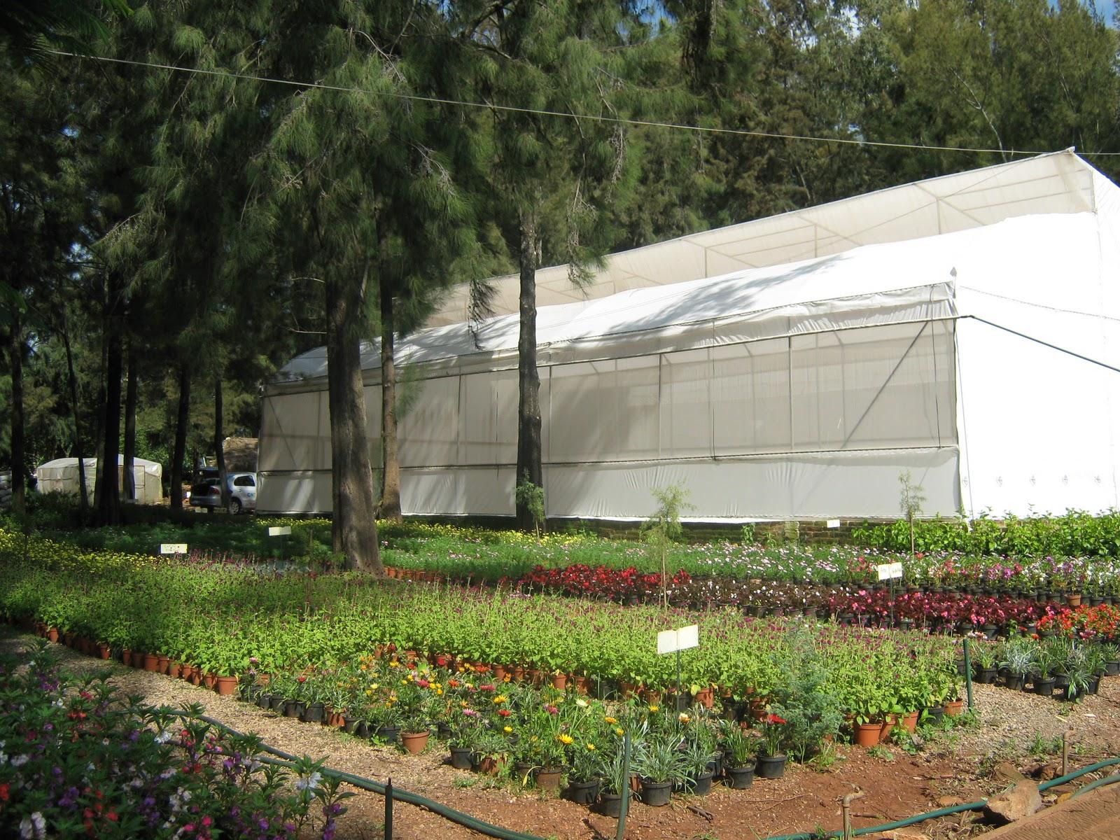 Vivero municipal de tepatitl n de morelos for Viveros de plantas de ornato