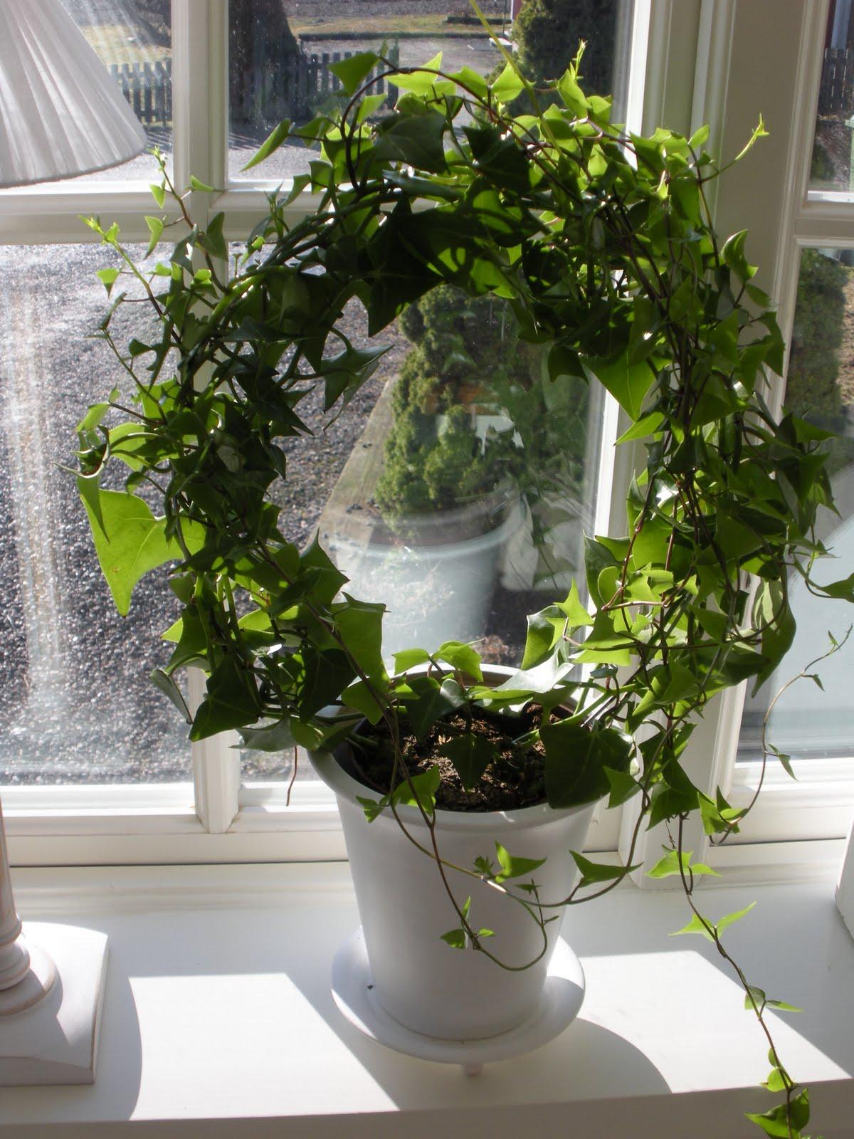 grön växt på båge
