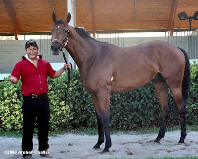 Big Brown after the Florida Derby