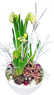 julgrupp med tazett, hyacint, åderblad
