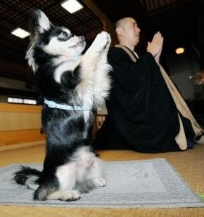 The Pet's Show: Buddhist Dogs Prays For Wordly Desires