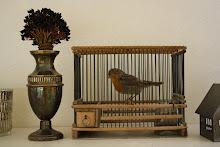 Liten fågel i liten bur