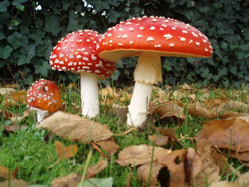 lsd лсд грибы: