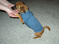 Little Blue Dog sweater