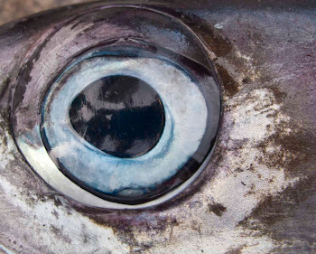 Fish-vision