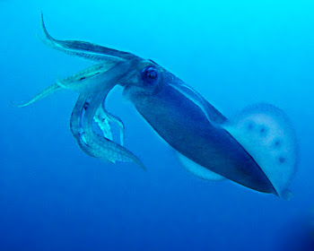 Eging tropical squid fishing