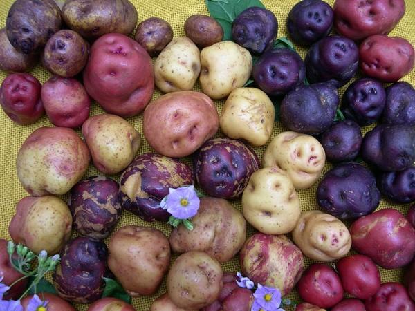 en el mundo existen 5000 variedades en peru se encuentran alrededor de