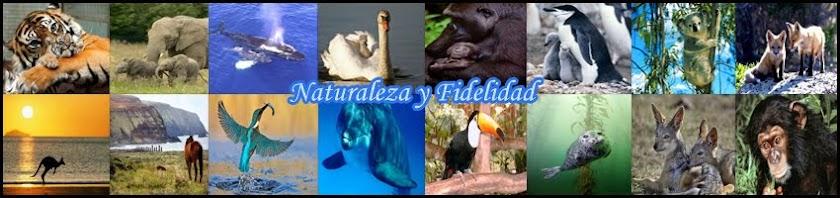 Naturaleza y fidelidad