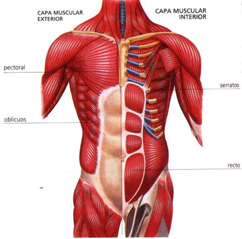 Ejercicios para los músculos abdominales   DIARIO DE UN FISICOCULTURISTA