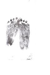 Daniel's Footprints