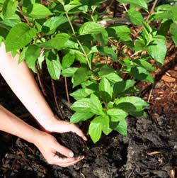 Peluang Usaha Menjanjikan Baru 2014 Modal Kecil Pupuk Organik