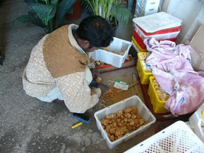 Truffles being cleaned at the Omani market