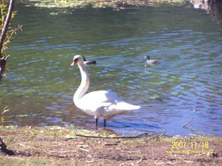 Aves en la laguna de Juanacatlán